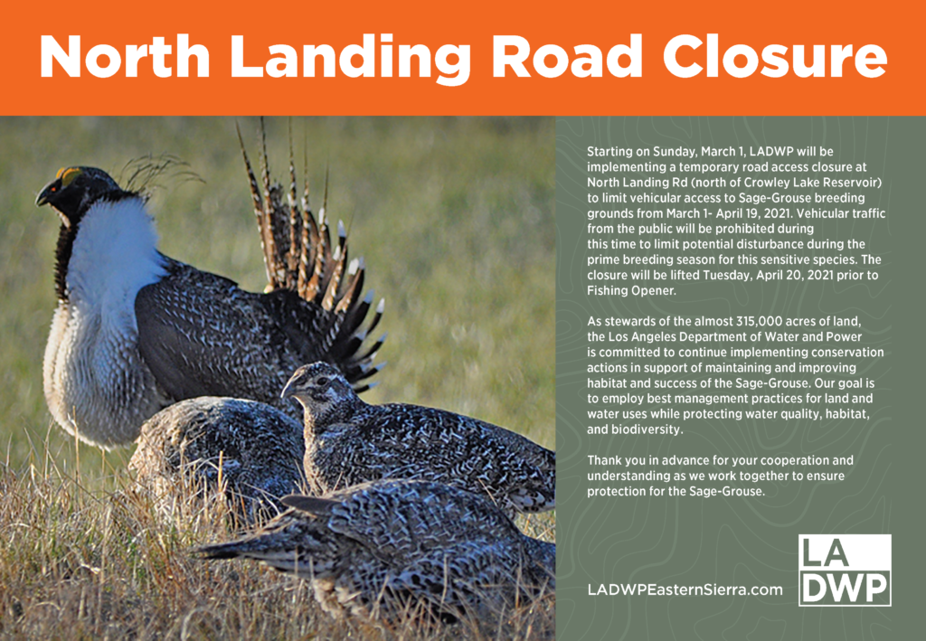 photo of sage grouse with public notice of North Landing Road Closure